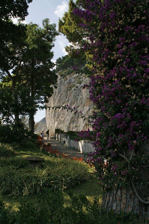 Capri wyspa, sławna droga na górach z kwiatami zdjęcie royalty free