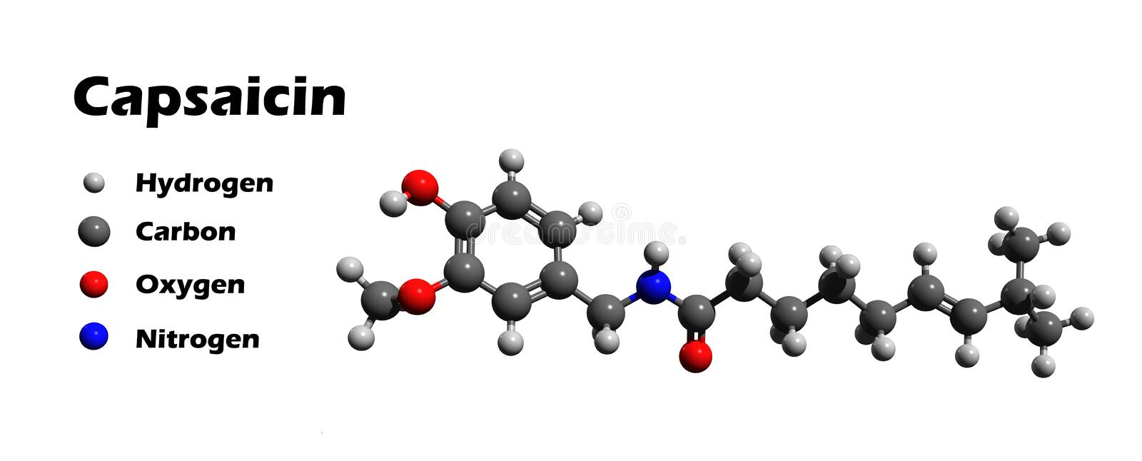 Capsaicin 3D model. Capsaicin is the spicy constituent of peppers, cayenne pepper, chili pepper and other. It is the hottest known compound royalty free illustration