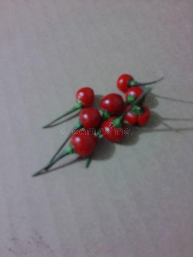 Capsicum frutescens stock photo