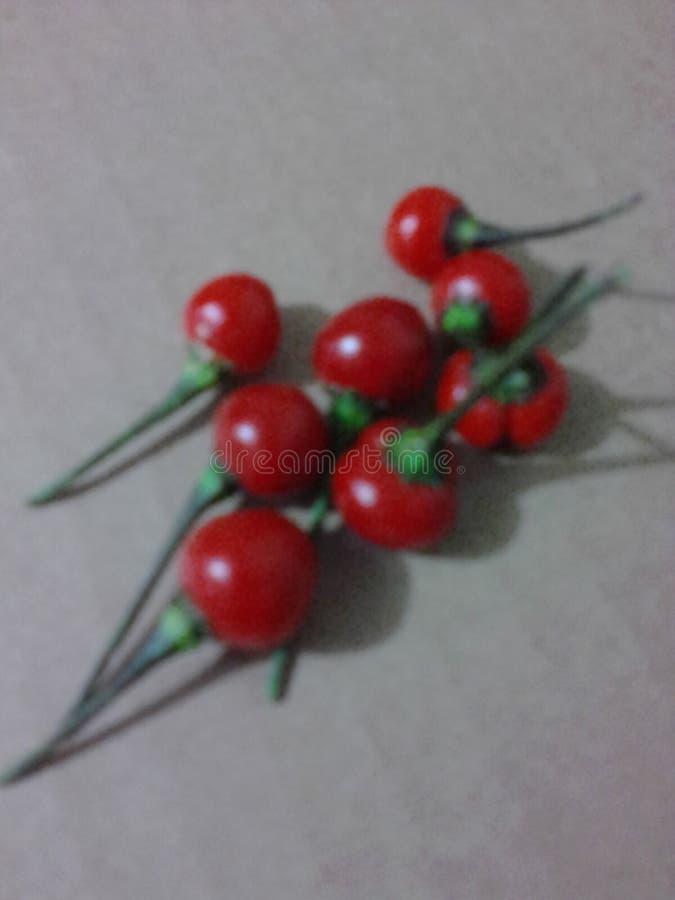 Capsicum frutescens stock photography