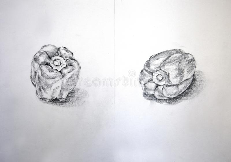 Capsium different view on pencil sketch royalty free stock image