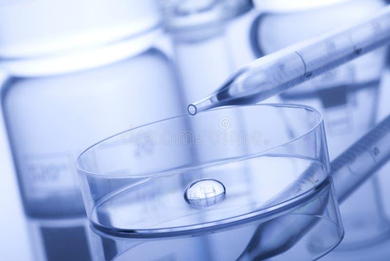 Capsule di Petri e pipetta immagini stock
