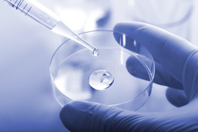 Capsule di Petri e pipetta fotografie stock