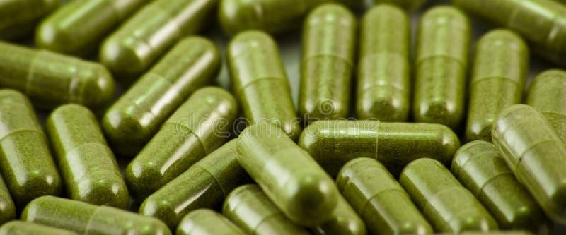 capsules växt- brett royaltyfri bild