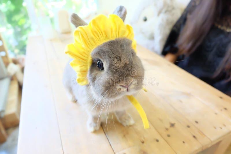 Captivating rabbit royalty free stock image