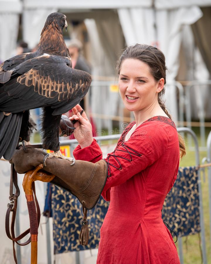 Captive wedge tailed eagle with female trainer / handler in red dress getting ready for flight exhibition at a show. St Ives, Sydney, Australia - Sept 21 2019 royalty free stock photos