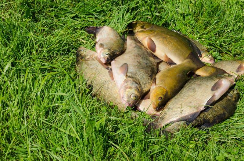Captura acertada en la hierba al aire libre foto de archivo libre de regalías