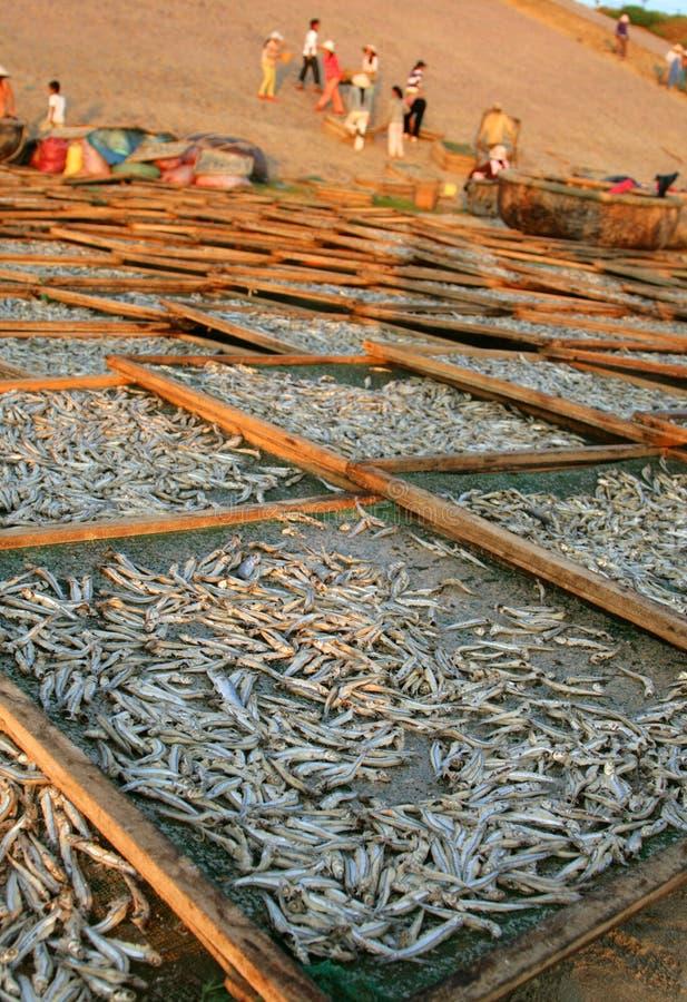 Captura de la pequeña sequedad en la orilla, Vietnam de los pescados foto de archivo
