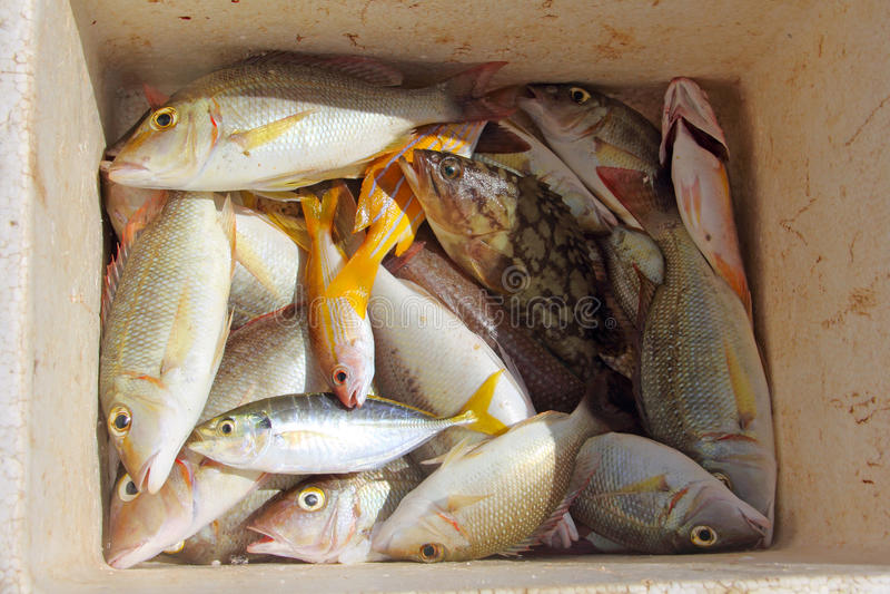 Captura de pescados tropical fotos de archivo libres de regalías