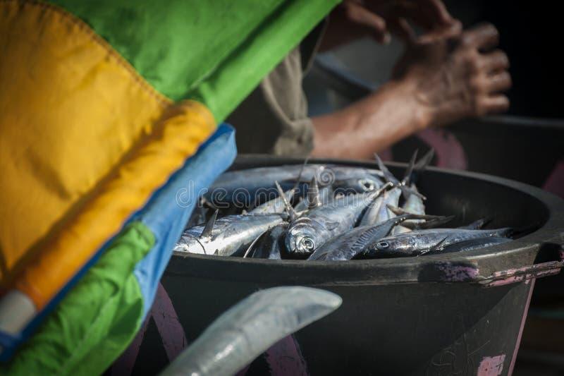 Captura do ` s do pescador do dia foto de stock royalty free