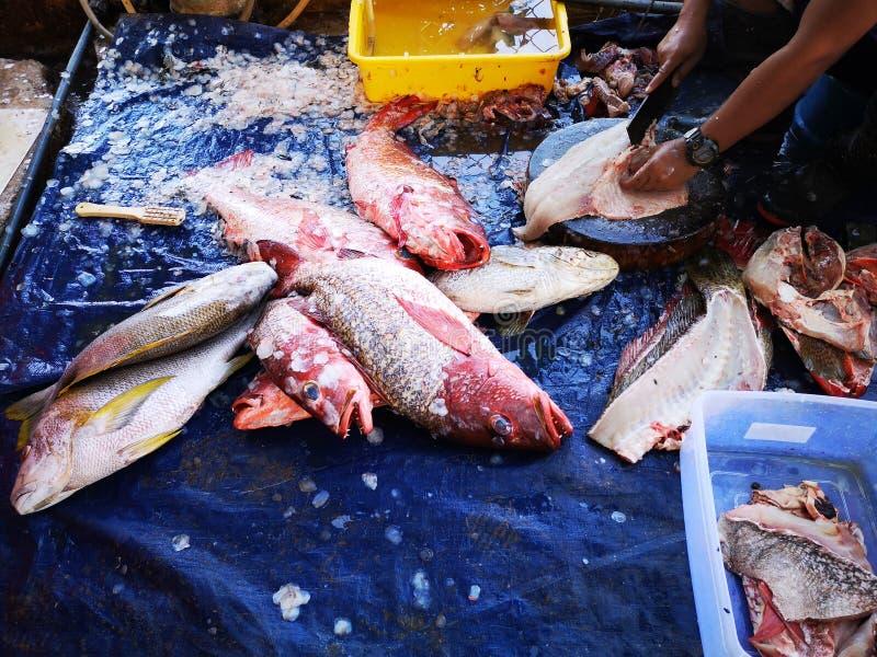 A captura para hoje e pescador que limpa os fieshes fotos de stock