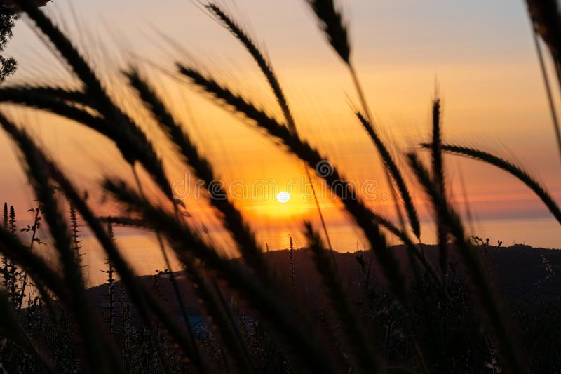 Sunset during walking in Nature royalty free stock photos