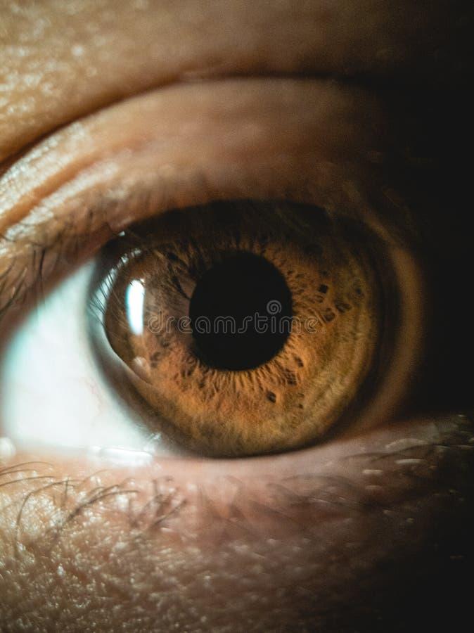Capture de fermeture verticale de l'oeil brun d'une personne photos libres de droits