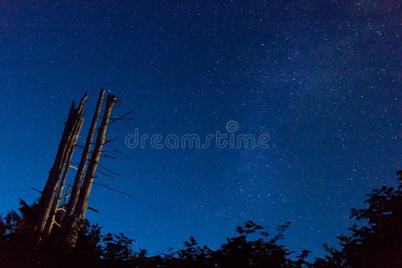 Capture de nuit photographie stock