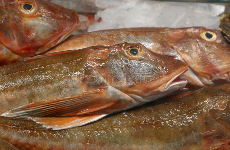 Capture de poissons fraîche sur l'affichage de marché au détail images libres de droits