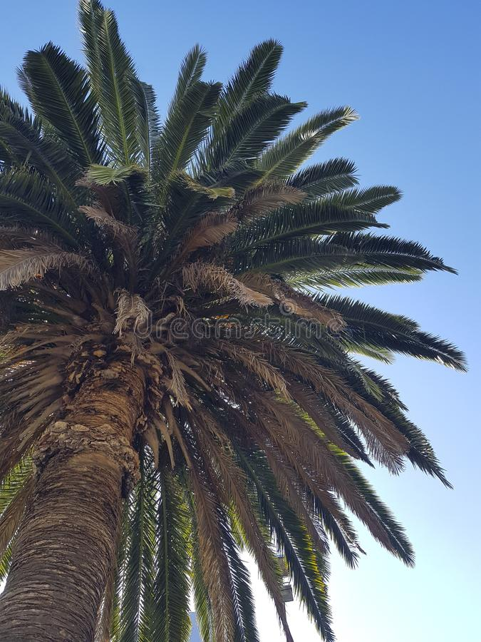 Capture verticale d'angle bas d'une magnifique paume et du ciel en arrière-plan photos libres de droits