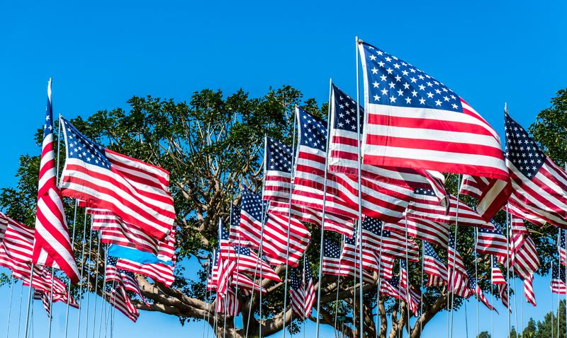 American Flags in the Wind. Captured in California on a national Holiday. Awesome Shot of a lot of Flags royalty free stock photography