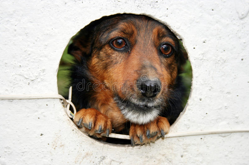 Captured dog