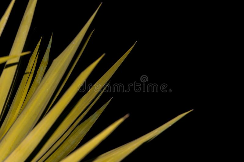 Wild flowers at night royalty free stock image