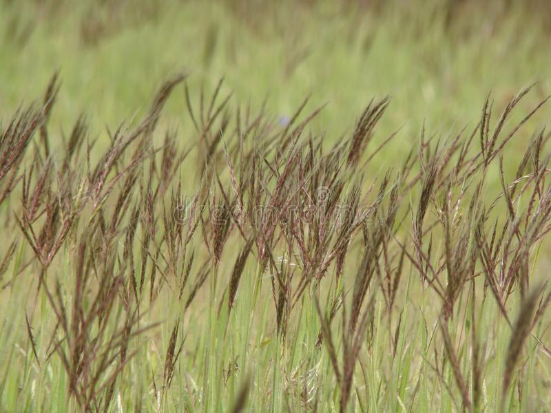 Diversity at every level of life grass crops royalty free stock photo