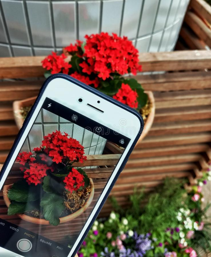 Capturing Phone Capturing Flowers. Picture of capturing phone capturing flowers royalty free stock images