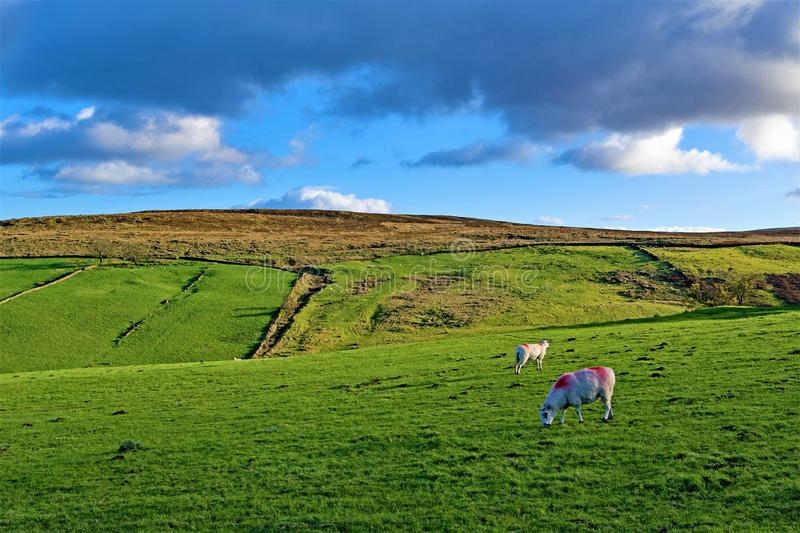 Wooley Heights, Lower Withens, Haworth, West Yorkshire. stock photography