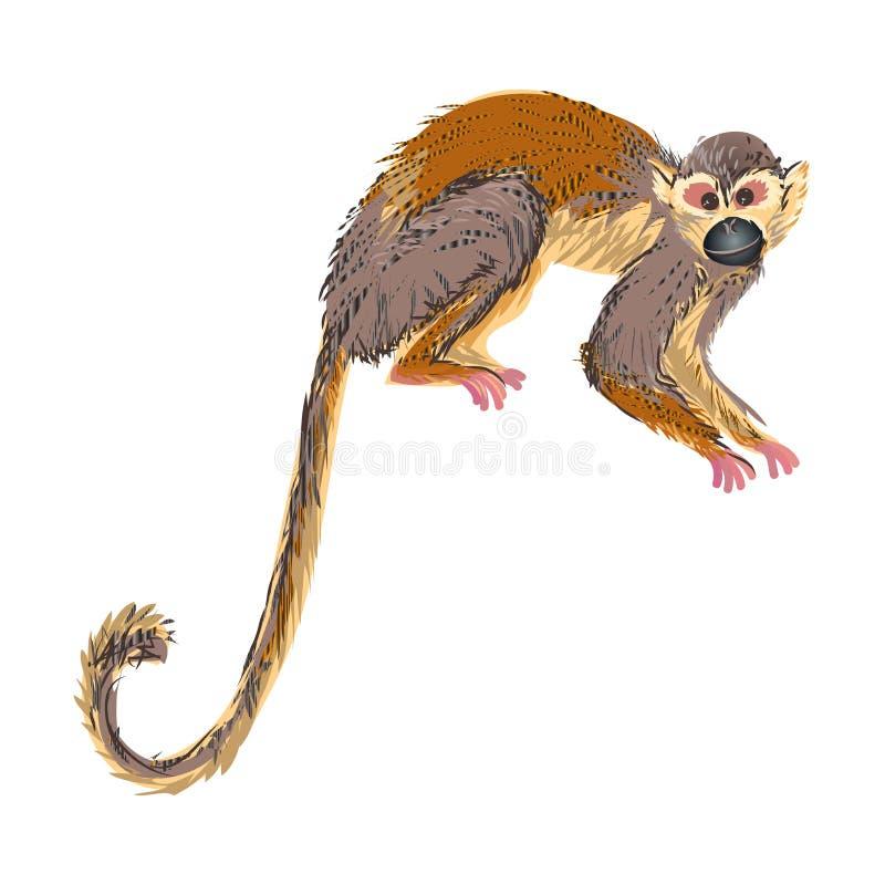 Capuchin aap dierlijke tropische wildernis klaar te springen royalty-vrije illustratie