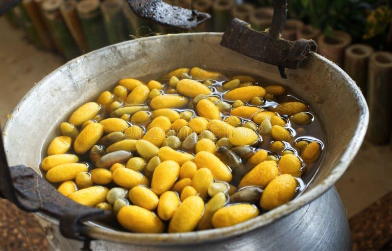 Capullos amarillos de ebullición del gusano de seda por la caldera para hacer el hilo de seda: Primer fotos de archivo libres de regalías