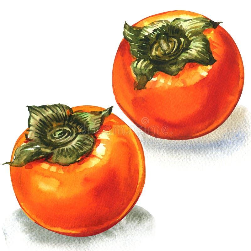 Caqui anaranjado maduro fresco, dos frutas, aisladas, ejemplo de la acuarela en blanco ilustración del vector
