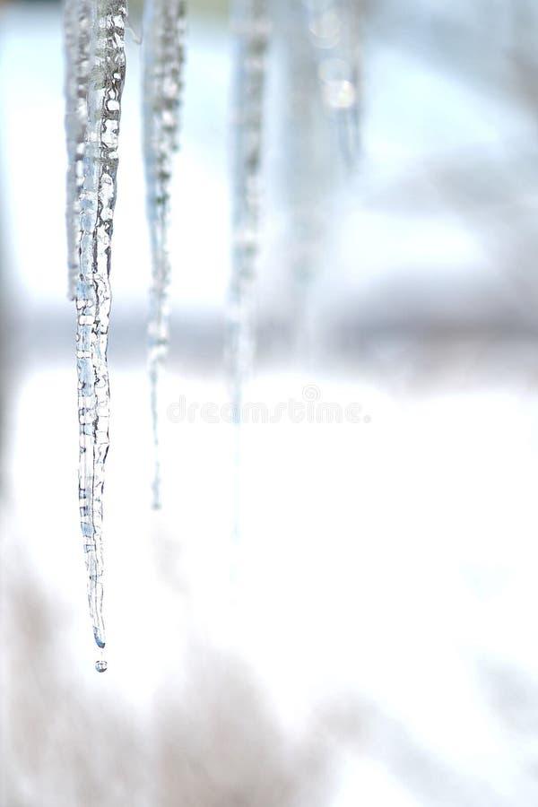 Carámbanos que derriten en invierno fotos de archivo