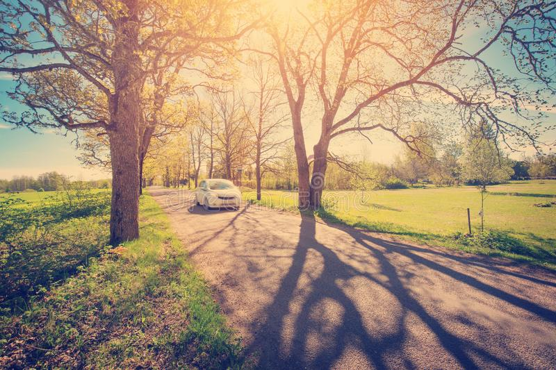 Car on asphalt road in spring. Car on asphalt road on spring day at park. Transport in alley at springtime in beautiful sunny weather royalty free stock photography