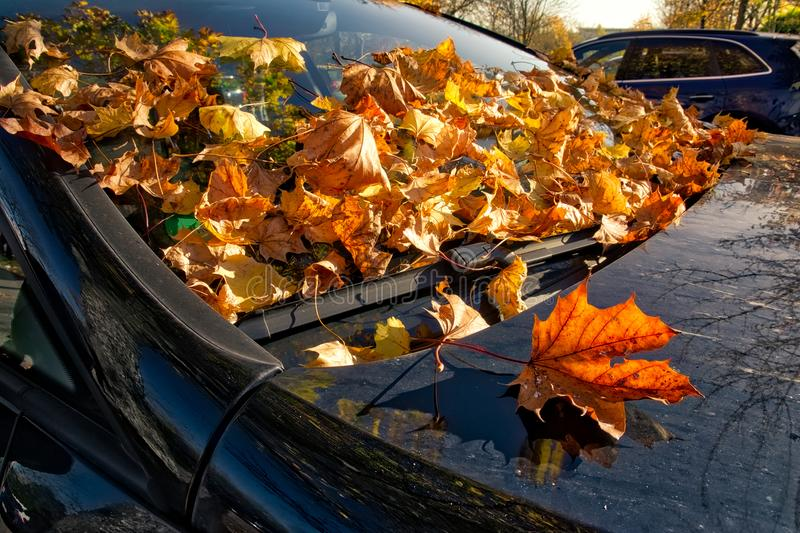 Car Autumn Leaves Wipers Hood Automotive Detail Body Fall Orange. Outdoors royalty free stock photos