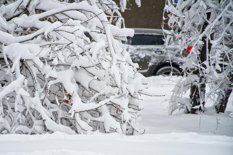A car behind snow-covered trees and snowdrifts. Winter in the city stock photography