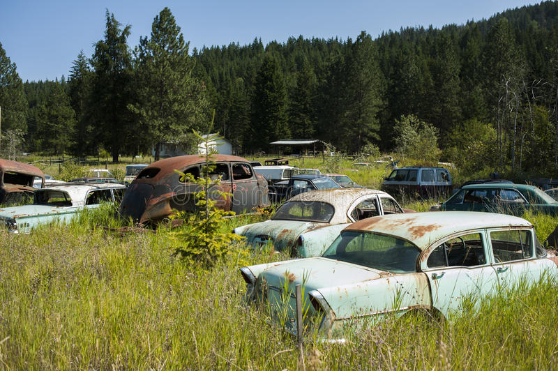 Car cemetary in canada. Canada, British Columbia, old car cemetary at forest royalty free stock images