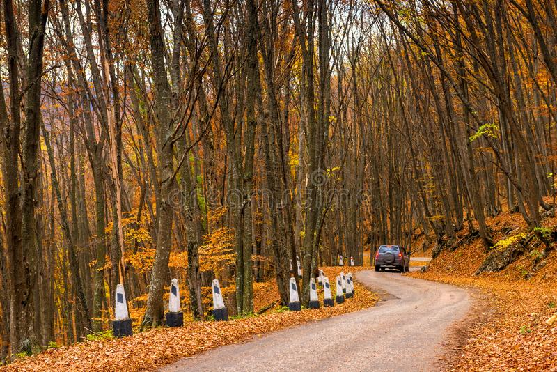 A car drives along a winding mountain road on a fall day surrounded. By forest stock images