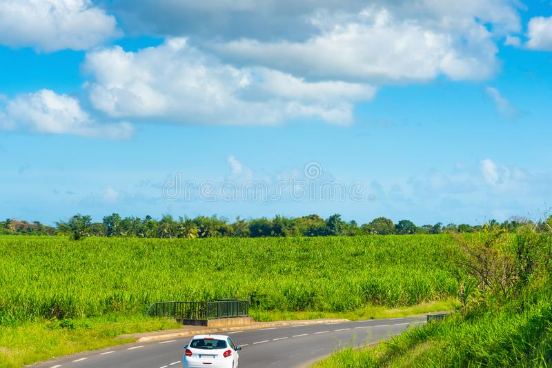 Car driving on a country road in beautiful Guadeloupe. French west indies. Lesser Antilles, Caribbean, street, countryside, palm, tropics, tropical, france royalty free stock image
