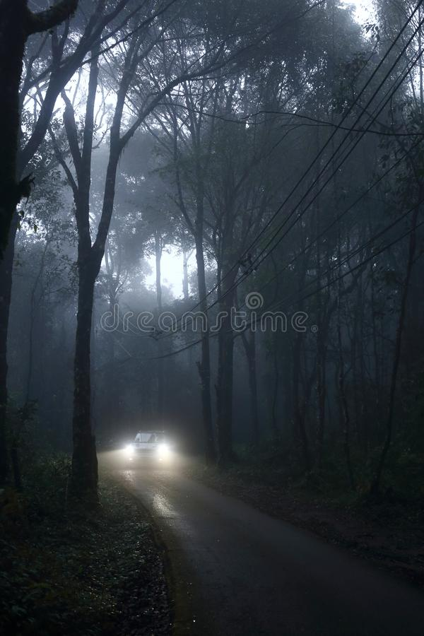 Car driving through fog in forest. On rainy season stock images