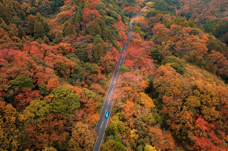 A car driving on road with fall foliage in autumn season near Fujikawaguchiko, Yamanashi. Aerial view of trees in Japan. Background royalty free stock photos