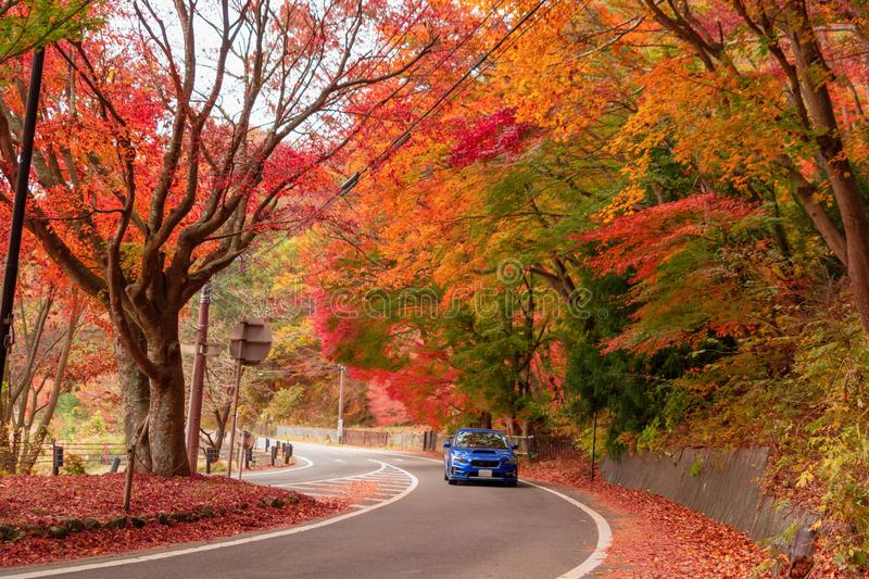 A car driving on road path with red fall foliage in autumn near. Fujikawaguchiko, Yamanashi. A tree in Japan with blue sky background stock images