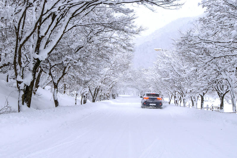 Car and falling snow in winter on forest road with much snow. stock photography