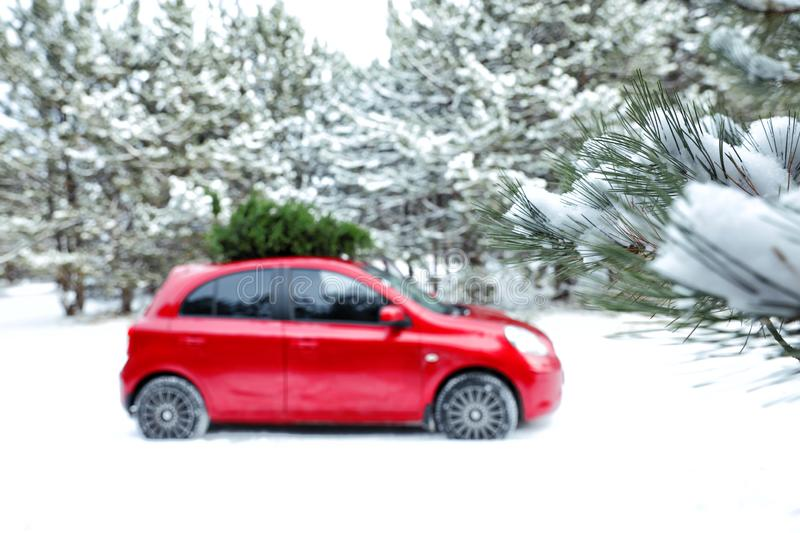 Car with fir tree on roof in snowy forest. Space for text. Car with fir tree on roof in snowy winter forest. Space for text stock image