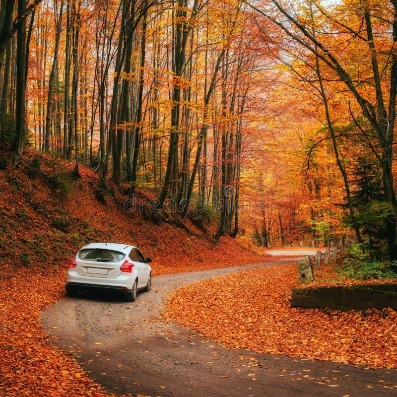 Car on a forest path stock photos