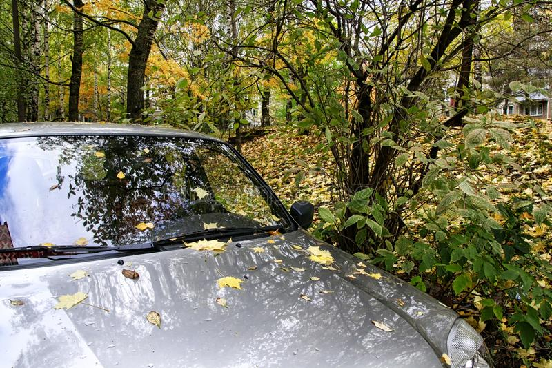 Car in a forest in a spring day. Without sun royalty free stock photo