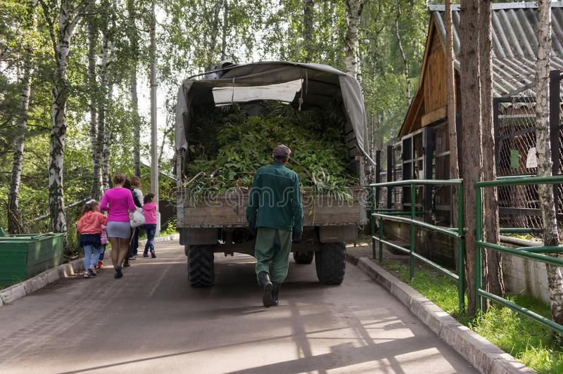 Car with green deer feed rides along the alley, followed by a worker for feeding the animals of the park. KRASNOYARSK,RF - August 28,2016: Car with green deer stock image