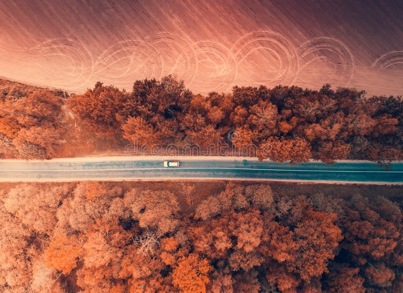 Car moving in autumn forest from above. Autumn transportation background. Car moving in autumn forest from above. Aerial autumn backdrop stock photos