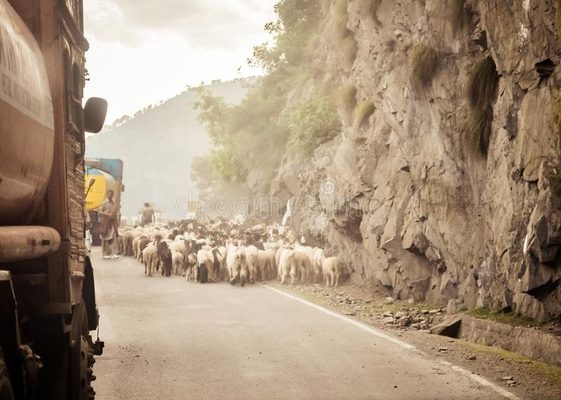 Car Point of view image. A flock of Sheep walking along a country highway in himalayan mountain pass in Leh Ladakh Manali Road of stock image