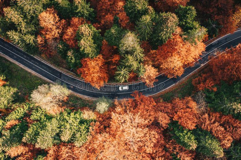 Car on the road surrounded by forest in the fall. Carpathian Mountains, Romania royalty free stock images