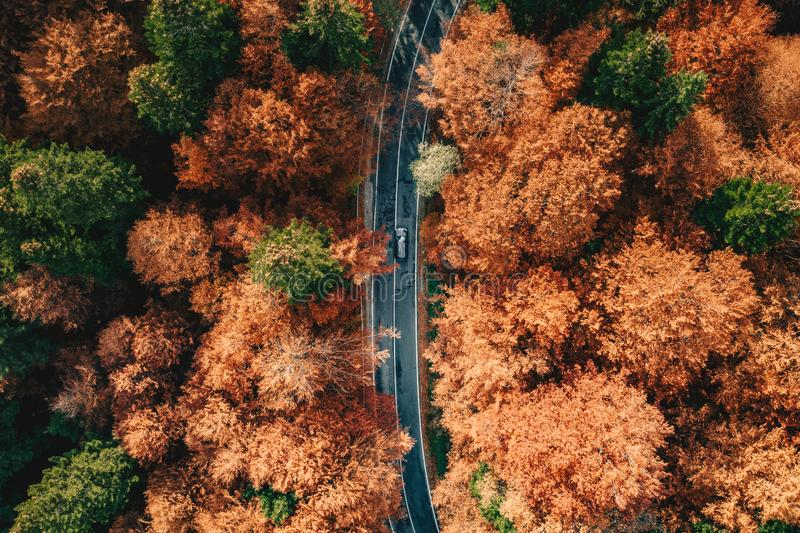 Car on the road surrounded by forest in the fall. Carpathian Mountains, Romania royalty free stock photo