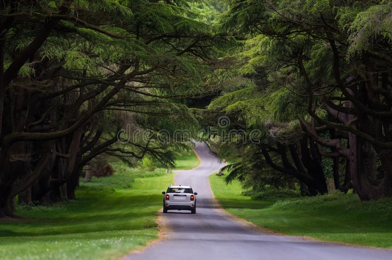 A car running on the avenue in the Tollymore Forest Park royalty free stock photos