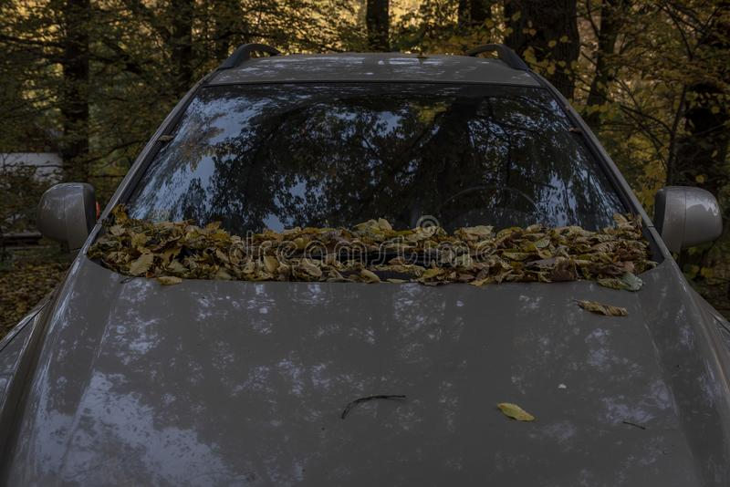 Car standing in a forest covered with fall leaves. In autumn stock images